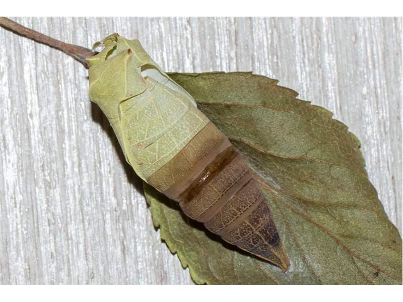 insekten sachsen