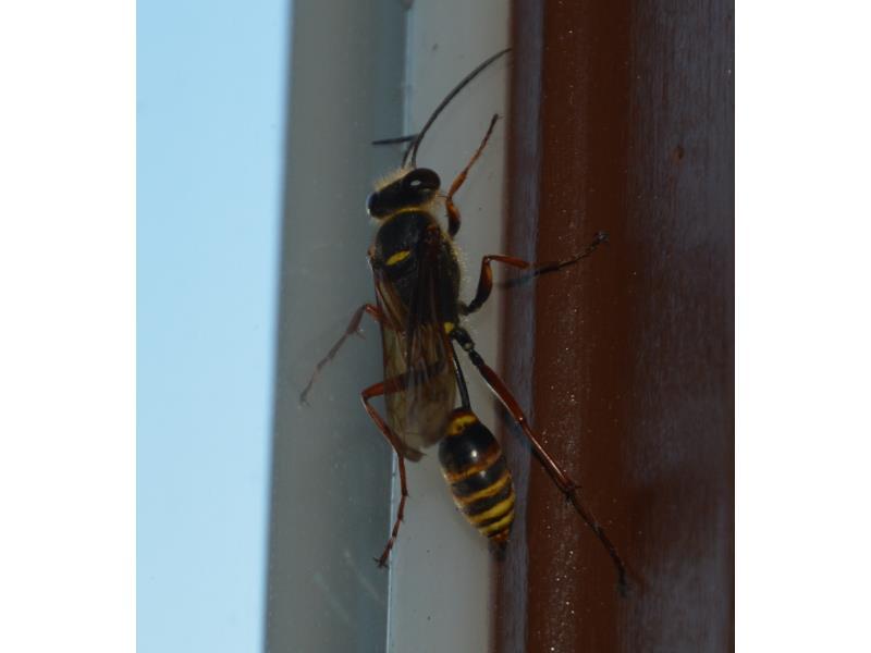 Super Insekten Sachsen MT82